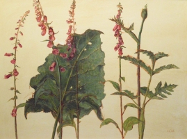 14. Burdock and Foxgloves