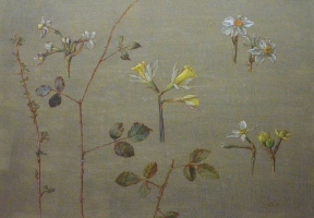 41. Narcissus, Daffodil, Brambles, and Gooseberry Twig