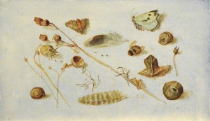 52. Feathers, Snails, Moths, and Dried Seeds